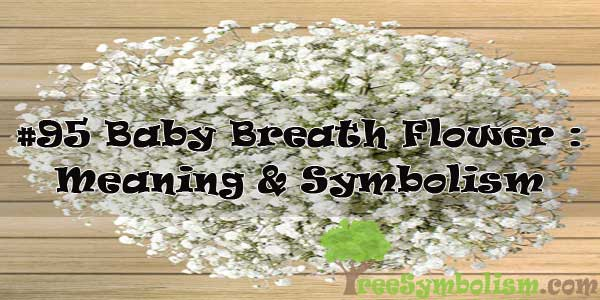 #95 Baby Breath Flower : Meaning & Symbolism