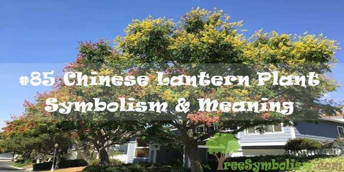 #85 Chinese Lantern Plant - Symbolism & Meaning