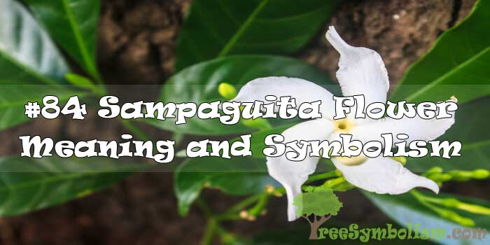 #84 Sampaguita Flower : Meaning & Symbolism