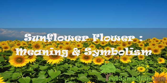 #78 Sunflower Flower : Meaning & Symbolism