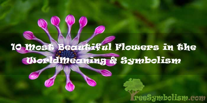 10 Most Beautiful Flowers in the World - Meaning & Symbolism