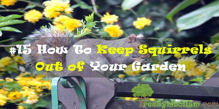 #15 How To Keep Squirrels Out of Your Garden