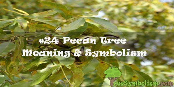 #24 Pecan Tree : Meaning & Symbolism
