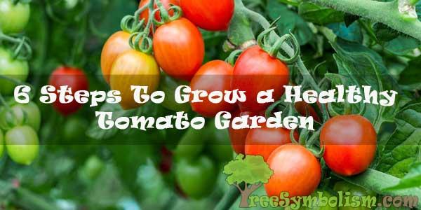 6 Steps To Grow a Healthy Tomato Garden