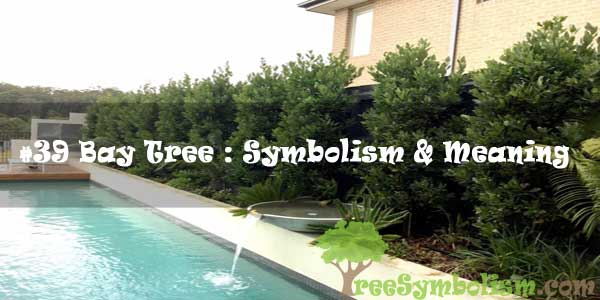 #39 Bay Tree : Symbolism & Meaning