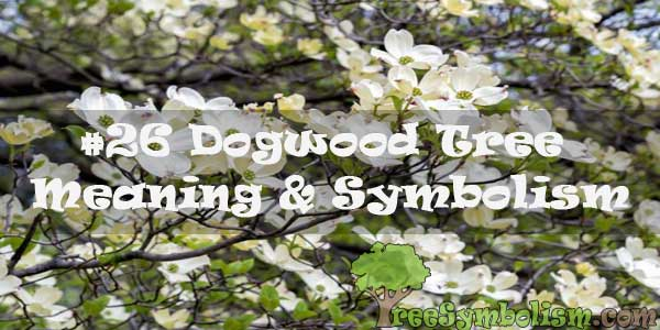 #26 Dogwood Tree - Meaning & Symbolism