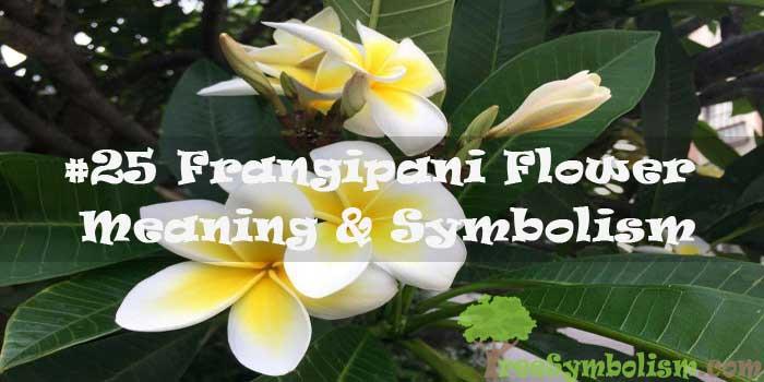 #25 Frangipani Flower - Meaning & Symbolism