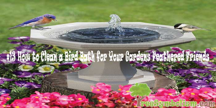#13 How to Clean a Bird Bath for Your Gardens Feathered Friends