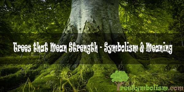 Trees that Mean Strength - Symbolism & Meaning