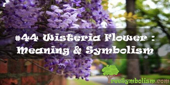 #44 Wisteria Flower : Meaning & Symbolism
