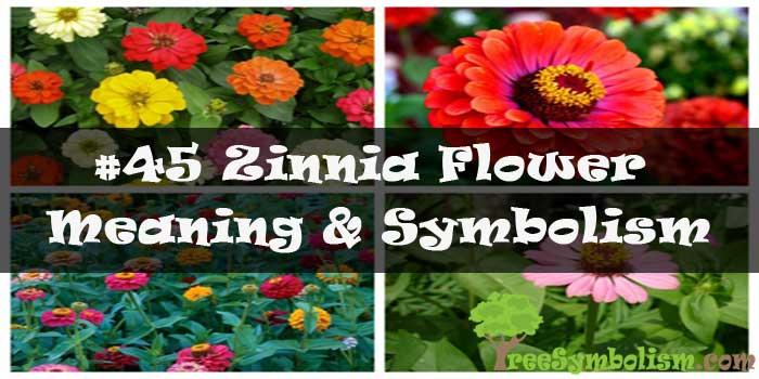 #45 Zinnia Flower - Meaning & Symbolism