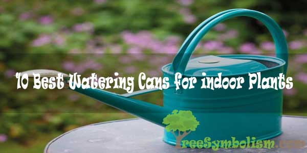 10 Best Watering Cans for indoor Plants to Buy Reviews