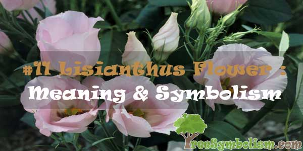 #11 Lisianthus Flower : Meaning & Symbolism