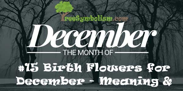 #15 Birth Flowers for December - Meaning & Symbolism