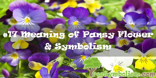 #17 Meaning of Pansy Flower & Symbolism