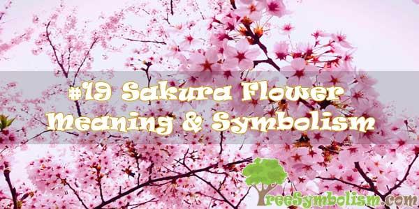 #19 Sakura Flower : Meaning & Symbolism