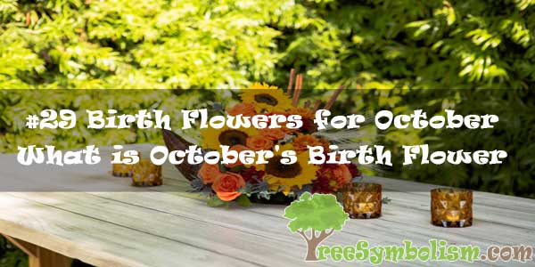 #29 Birth Flowers for October - What is October's Birth Flower