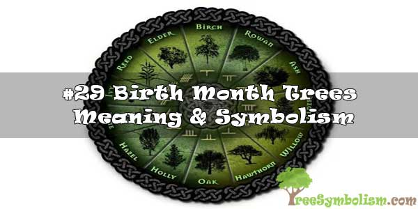 #29 Birth Month Trees : Meaning & Symbolism