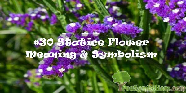 #30 Statice Flower : Meaning & Symbolism