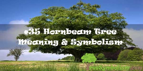 #35 Hornbeam Tree : Meaning & Symbolism
