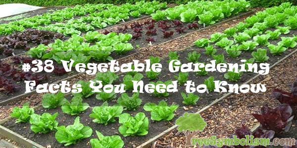 #38 Vegetable Gardening Facts You Need to Know