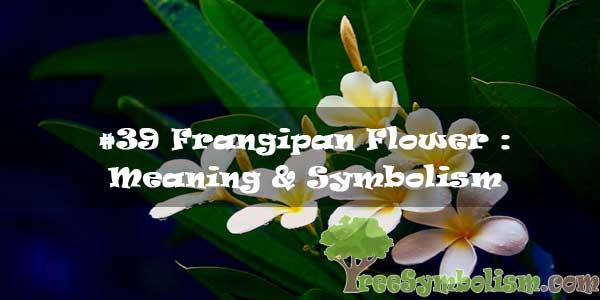 #39 Frangipan Flower : Meaning & Symbolism