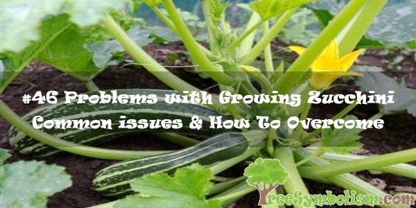 #46 Problems with Growing Zucchini : Common issues & How To Overcome
