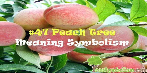 #47 Peach Tree : Meaning & Symbolism