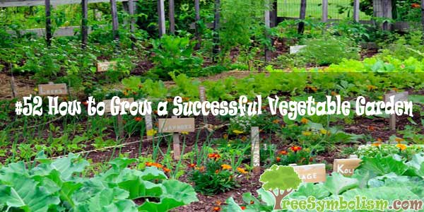 #52 How to Grow a Successful Vegetable Garden [2020]