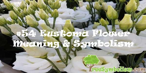 #54 Eustoma Flower : Meaning & Symbolism