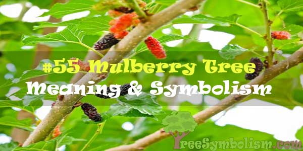 #55 Mulberry Tree : Meaning & Symbolism