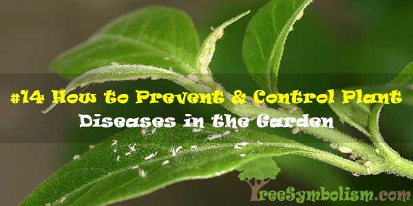 #14 How to Prevent & Control Plant Diseases in the Garden