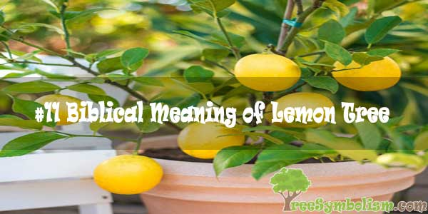 #11 Biblical Meaning of Lemon Tree