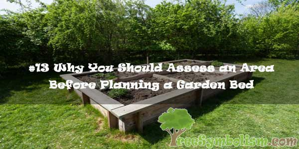 #13 Why You Should Assess an Area Before Planning a Garden Bed