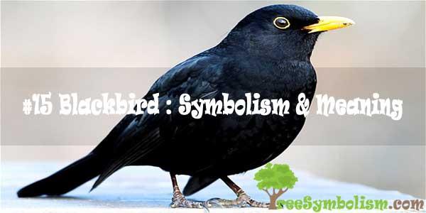 #15 Blackbird : Symbolism & Meaning