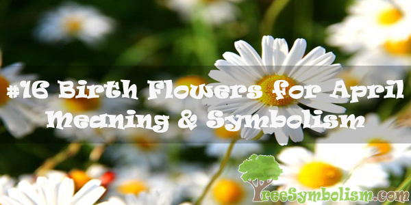 #16 Birth Flowers for April : Meaning & Symbolism