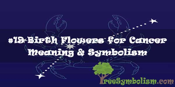 #19 Birth Flowers for Cancer : Meaning & Symbolism