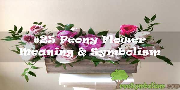 #25 Peony Flower : Meaning & Symbolism