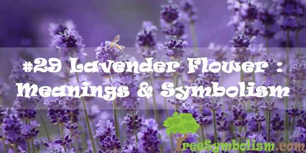 #29 Lavender Flower : Meanings & Symbolism