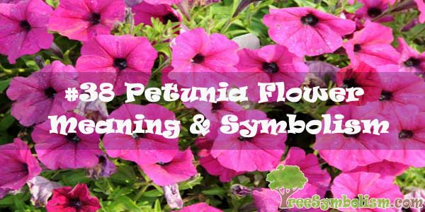 #38 Petunia Flower : Meaning & Symbolism