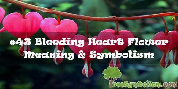 #43 Bleeding Heart Flower : Meaning & Symbolism