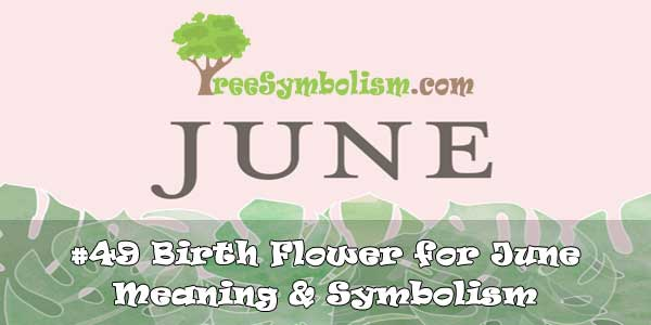 #49 Birth Flower for June - Meaning & Symbolism
