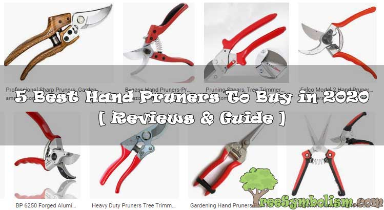 5 Best Hand Pruners To Buy in 2020 + [ Reviews & Guide ]