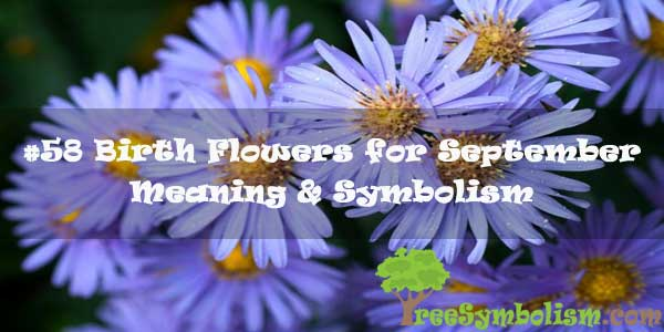 #58 Birth Flowers for September - Meaning & Symbolism