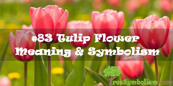#83 Tulip Flower : Meaning & Symbolism