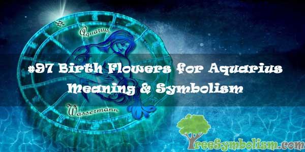 #97 Birth Flowers for Aquarius : Meaning & Symbolism