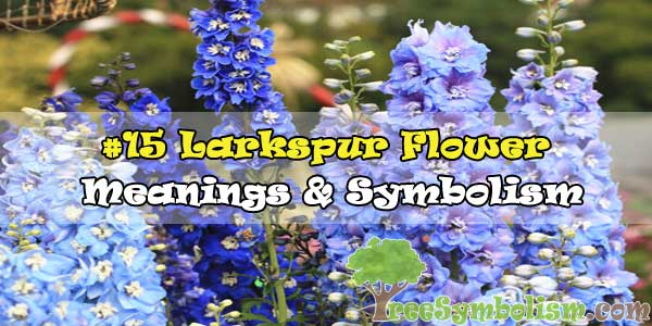 #15 Larkspur Flower : Meanings & Symbolism