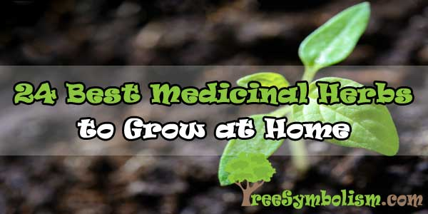 24 Best Medicinal Herbs to Grow at Home