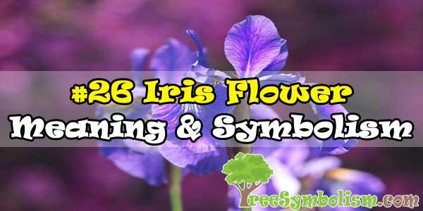 #26 Iris Flower : Meaning & Symbolism