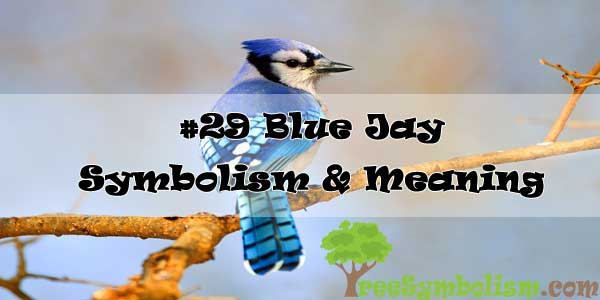 #29 Blue Jay : Symbolism & Meaning